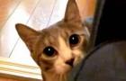 Katze spielt Verstecken
