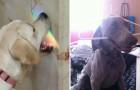 19 Foto's Van Honden Die Iedereen Laten Lachen