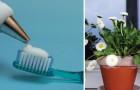 Un ingrediente natural al puesto de los productos quimicos: descubre 18 usos del agua oxigenada