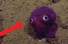 Couleurs criardes et grands yeux: voici le mollusque qui semble tout droit sorti d'un dessin animé