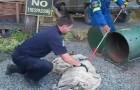 Hij vangt twee zwervende berenwelpen op... de beslissing die hij daarna maakt, kost hem zijn baan!