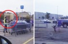 A monkey wearing a diaper appears in a parking lot --- a sad reality!