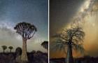 Cerca gli alberi più antichi del mondo e li ritrae con il cielo stellato: il risultato è mozzafiato