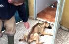 Esta cachorra lograba a duras penas permanecer de pie, pero los veterinarios lograron salvarle la vida