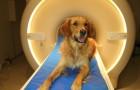 Faites attention à ce que vous dites: une étude montre que le chien comprend vos MOTS