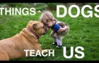 What our faithful friends can teach us