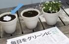 Prima lo leggi, poi lo pianti: ecco il segreto di uno dei più antichi giornali giapponesi
