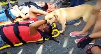 Ein Mann wurde bei einem Unfall verwundet: es ist rührend, wie der Hund ihn tröstet