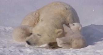 The sweet polar family