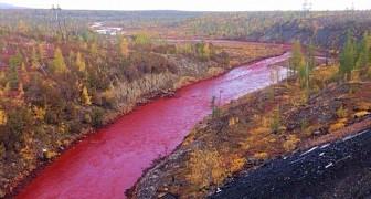 Il fiume siberiano si tinge di rosso: le autorità negano, ma la causa è nota a tutti