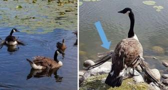 Ecco perché non dovresti MAI dare del pane agli uccelli selvatici