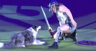 L'abilità di questo cane ed il suo addestratore va oltre l'immaginabile: eccoli in un duello tra gladiatori!