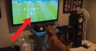 Il suo padrone mette una partita alla TV: quando vede la palla il cane IMPAZZISCE!