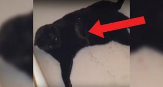 Il gatto entra nella vasca e inizia a rotolarsi: poco dopo è... pronto per il sabato sera!