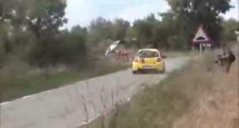 Coniglio vs Rally