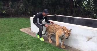 Il famoso pilota di Formula 1 gioca uno scherzo alla tigre: la reazione del felino vi stupirà!