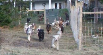 Ha salvato dal canile ben 45 cani: ecco il momento in cui li libera nella nuova casa