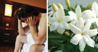 Problemi d'insonnia? Ecco 5 piante da mettere in camera da letto che vi concilieranno il sonno