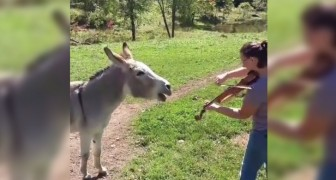 A donkey reacts to a woman playing the violin!