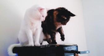 La padrona inserisce un CD nel computer... Non perdete di vista ciò che fa il gatto nero!