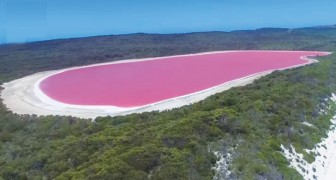 Fantastic drone images of an incredible PINK lake!