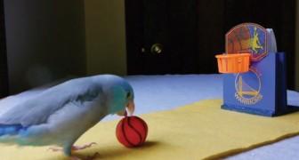 Il padrone ha predisposto il campo di gioco e il pappagallo sa come sfruttarlo!