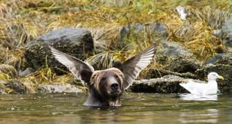 Il lato buffo della natura: 22 espressioni e pose di animali che vi faranno morire dal ridere