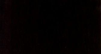 Tengono dei fossili in un armadio per 60 anni, poi scoprono che appartengono ad una creatura da record