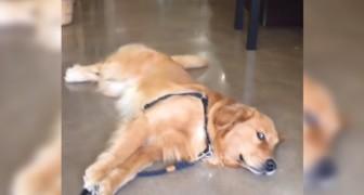 Entra con il cane in un negozio di animali... Ma non si aspettava da lui questa reazione!