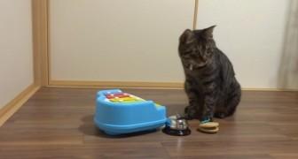 Als ze begint te zingen, komt de kat in beeld: wat hij doet met de instrumenten is ongelooflijk!