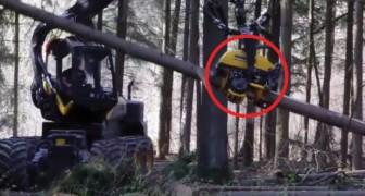 Quello che è in grado di fare questa macchina da lavoro è incredibile: tenete d'occhio il tronco!
