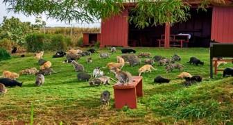 500 gatti randagi sono stati salvati dalla strada: oggi vivono tutti insieme su un'isola... Da sogno!