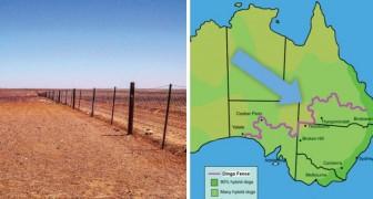 Una recinzione di 5400 km che taglia in 2 l'Australia: sai perché è stata costruita?