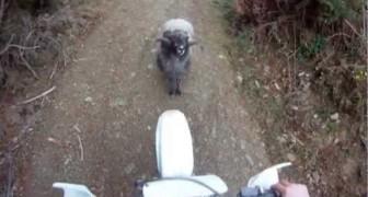 Monsieur le motard, tu ne passeras pas!