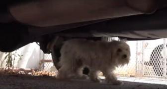 Questo cane abbandonato non voleva farsi avvicinare DA NESSUNO: guardate cosa è successo dopo