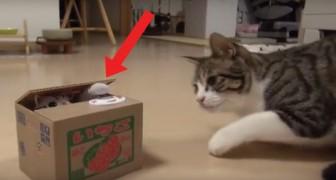 Dalla scatola spunta una zampetta: la curiosità del micio è esilarante!