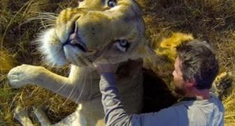 Knuddeln mit Löwen