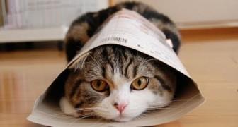 Ciao, io sono il gatto Maru