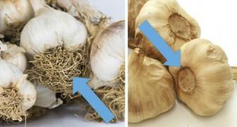 L'aglio cinese ha invaso il mercato: ecco perché non fa bene e come riconoscerlo