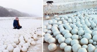 Des milliers de boules de neige ont envahi la Sibérie. Qu'est-ce qu'il se cache derrière ce phénomène bizarre?