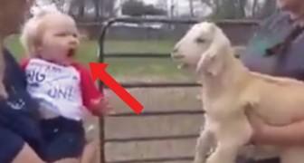 Een klein meisje ontmoet een geit: hun 'gesprek' is hilarisch!