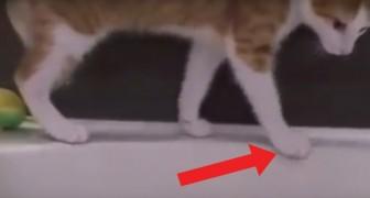 Il gatto fa uno scivolone nella vasca: ecco come reagisce al contatto con l'acqua
