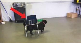 Den här trevliga hunden är smartare än vad den ser ut: vänta och se!