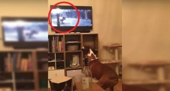 Der Weihnachtsspot gefällt jedem: so reagiert der Hund vor dem Fernseher