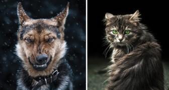 Il fait le tour de la ville et photographie les animaux : voici le superbe résultat de son travail
