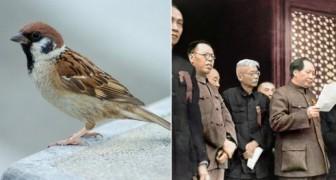 Quando la Cina sterminò i passeri: ecco uno dei peggiori disastri ambientali della storia