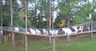 Ze roept de katten voor het ontbijt: dit is wat ze heeft gebouwd om de katten veilig over te laten steken!
