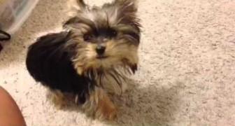 Il cucciolo più intelligente