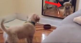 Deze hond ziet zichzelf voor de eerste keer in de spiegel: de mix van nieuwsgierigheid en achterdocht is hilarisch om te zien!
