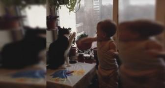 En kindje en een kat voeren een concurrentiestrijd: wie gaat deze strijd winnen?